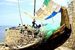 Cape boat 1241